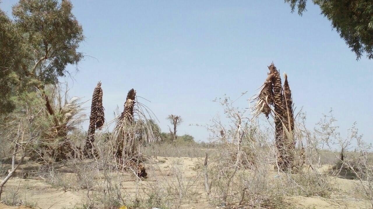 کمبود آب شرب در روستاهای بمپور کهن قطب هزاران ساله کشاورزی بلوچستان آیا اولین قربانی را خواهد گرفت