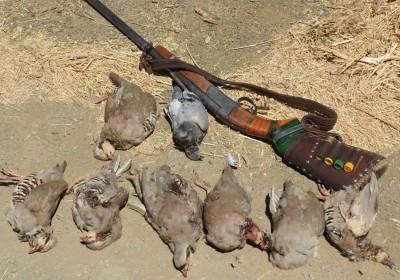 بازداشت شکارچی متخلف در رودان