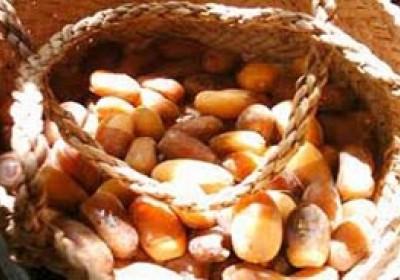 پیش بینی تولید ۸۴۰ تن خرمای زودرس در جنوب کرمان